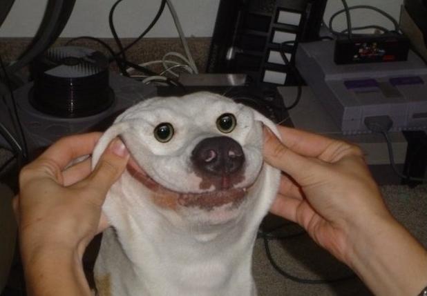 Smile -Goofy Dog